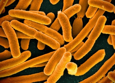E._coli_Bacteria_(16598492368).jpg