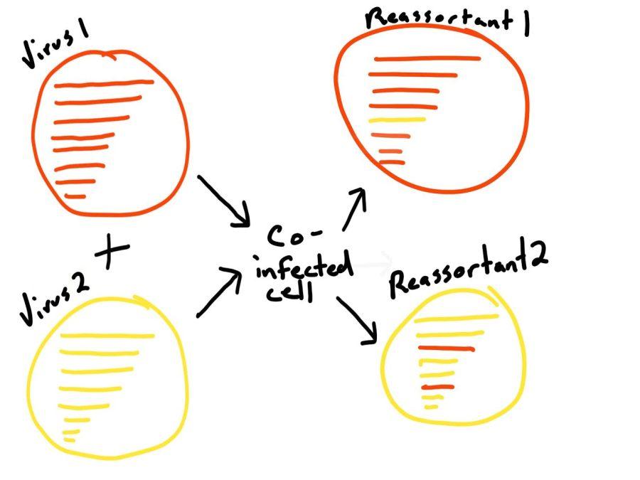 Reassortant virus