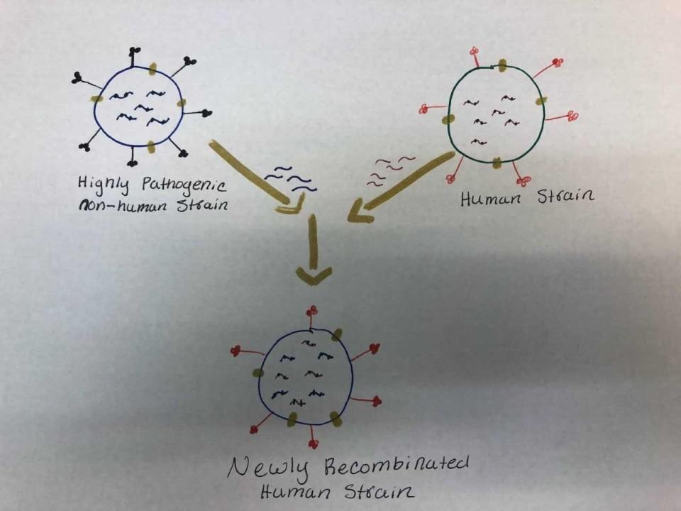 Astrovirus drawing.jpg